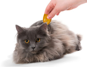 Dogs And Cats Share The Same Fleas It Is Important That All Pets In Your Home Are On A Flea Preventive Treating Pet For Has Never Been Easier